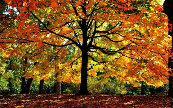 autumn-forest-trees-yellow-leaves-branches-sunlight-2k-wallpaper-middle-size